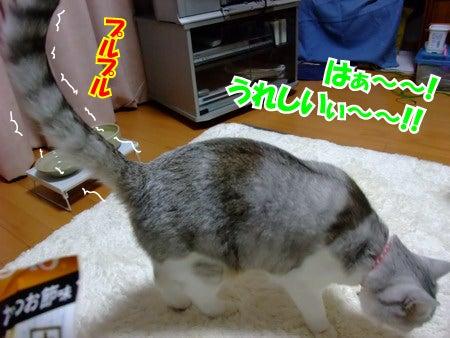 たけしのお笑いサドンデス - JapaneseClass.jp