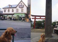 ここが'鎌倉'…なんだか人が多いワンッ