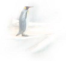 壁紙ペンギン2