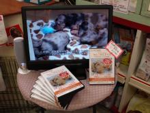 ミニチュアダックス DVD