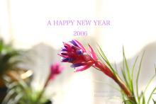 2006 NEW YEAR