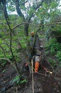 小笠原エコツアー情報 エコツーリズムの島 小笠原旅情報 小笠原の自然-127