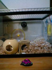 りゅちん巣