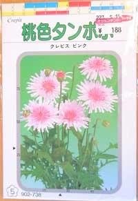 桃色タンポポ03