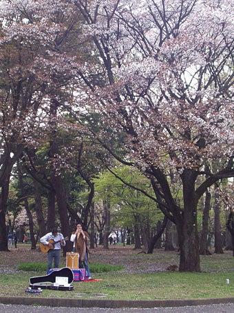 桜の木の下で歌う