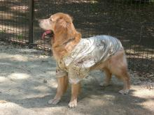 暑いからアロハを着てのドッグラ~ン♪♪