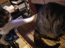 猫紙芝居4