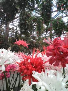 おみやげ 探検隊 の ブログ-花鳥園
