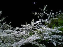 日立台の夜桜