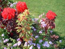 由仁ハーブガーデンの花
