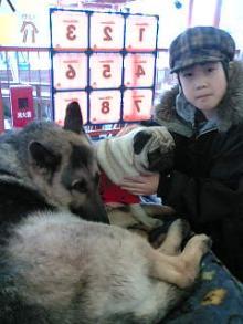 末っ子と犬たち