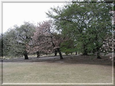新宿御苑4