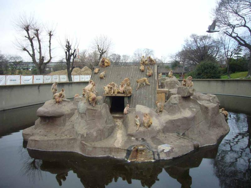 サルがいる大浜公園 猿島~旧堺燈台 (堺市堺区大浜北町4) | ○○日記