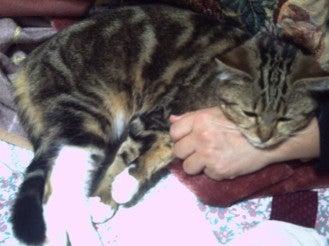 Cat Deys