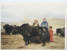 チベットの牧民