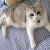 猫砂研究家の画像