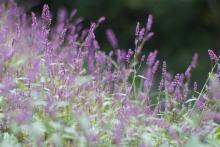 みかん園の雑草?