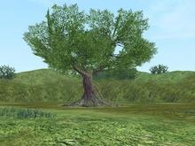 なんの木♪