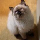 「Cat Cafe きまぐれねこ」の愛しきニャンコたち!!の記事より