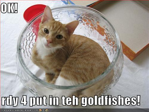 funny-pictures-cat-is-ready-for-you-to-put-the-goldfish-in-the-b