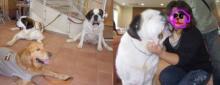大型犬ファンシャーのママ、大はしゃぎ^_^;