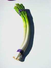 long green onion
