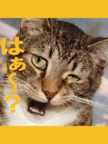 ィィジャン♪(´∀`pq)三(pq´∀`)ィィジャン♪