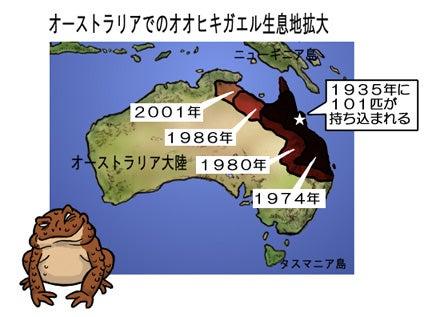 オオヒキガエルの生息域拡大中