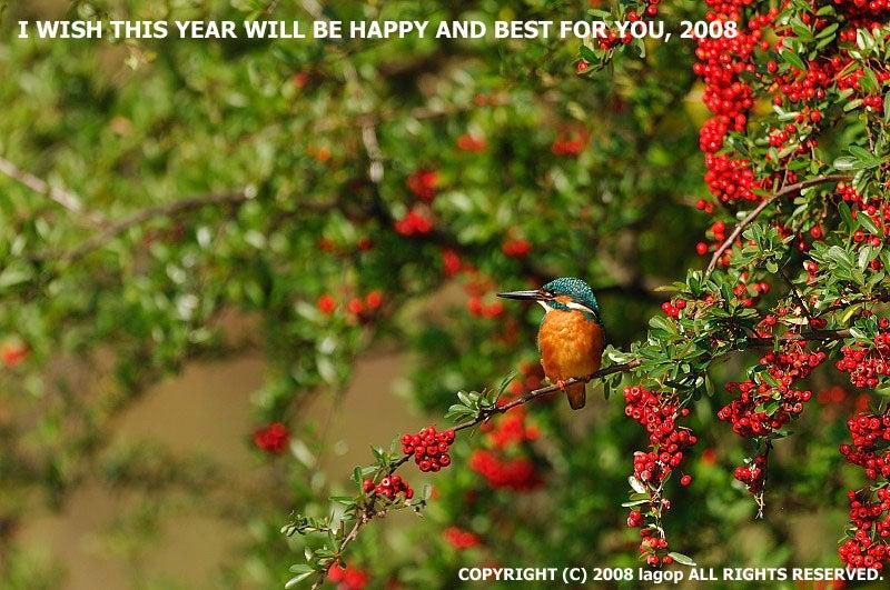 New Year Card 2008