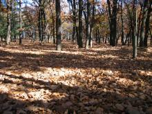 枯葉のじゅうたん