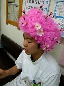 桜かつら2