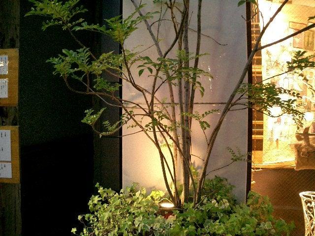 表参道の植物