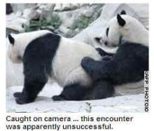 pandaporn
