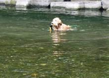 ボク、と~っても久しぶりの川遊び♪