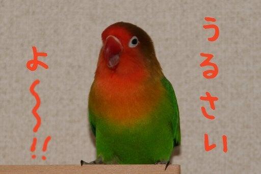 pinon-070214-04