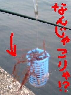 変な海草しか釣れてへんし…