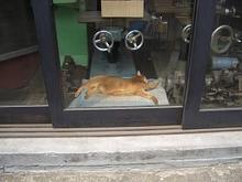 機械や猫-4