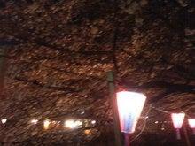 桜2005@目黒川