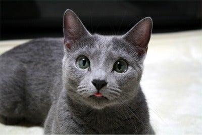 すみれ色の猫たち-luna19