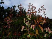 小笠原エコツアー情報 エコツーリズムの島 小笠原旅情報 小笠原の自然-1.31