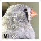 ミーコ(2004年2/24・お迎え)