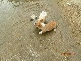 愛犬もはしゃぐ
