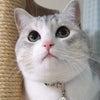 NEW猫砂とゴキ玩具の画像