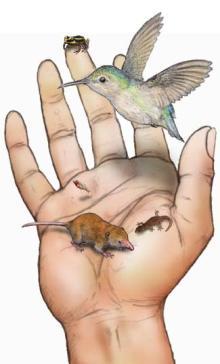 世界最小脊椎動物たち