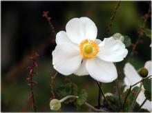 2712周明菊