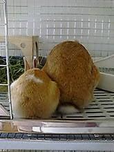 新宿ダッチうさぎ もこもな日記 with 7 rabbits♪-タイトル未設定