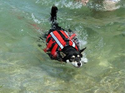 ライフジャケットが泳いでるみたいよ。