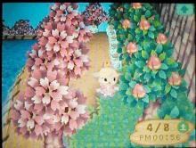 桜祭り11