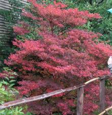 20061106_紅葉