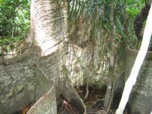 木の根っこ